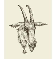 Hand drawn goat sketch a farm animal vector