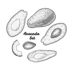Hand drawn engraved avocado set isolated on white vector