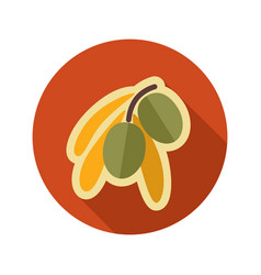 Olive flat icon tropical fruit vector