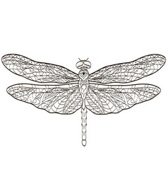 Coloring dragonfly insect for adults vector