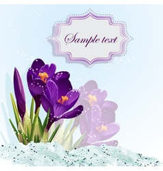Romantic background with crocuses vector