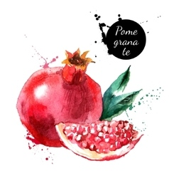 Hand drawn watercolor painting pomegranate on vector