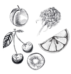 Collection of highly detailed hand drawn fruits vector image