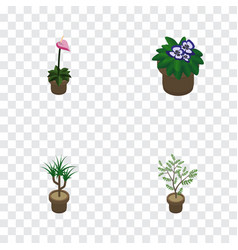 Isometric houseplant set of fern flowerpot vector