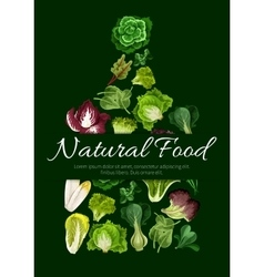 Natural food poster of leafy salad greens vector