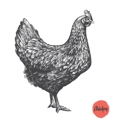 Chicken hand drawn Chicken meat and vector image vector image