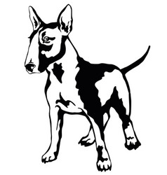decorative standing portrait of dog bull terrier vector image