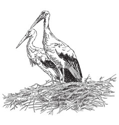 storks couple in the nest vector image vector image