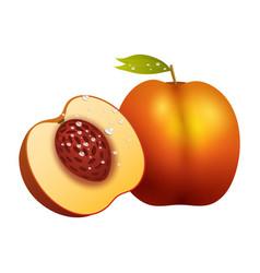 Peach fruit slice realistic 3d healthy vegetarian vector