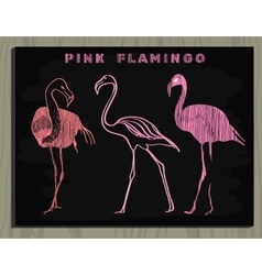 pink flamingo on chalk board vector image