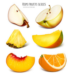 Slices of fresh fruits vector