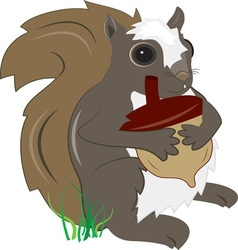 Squirrel with acorn vector