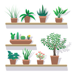 House plants in pots flat icons set vector