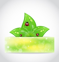 Ladybugs leaves banner vector image