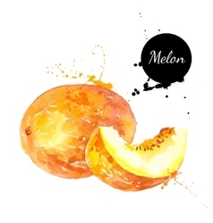 Hand drawn watercolor painting melon on white vector