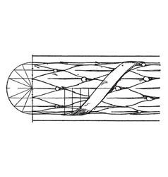 Antique enrichment torus moulding window arches vector