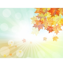 Autumn design vector image vector image