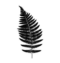 Fern frond balck silhouette vector