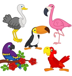Set of isolated exotic birds vector