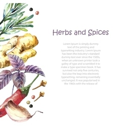 Watercolor collection of fresh herbs and spices vector