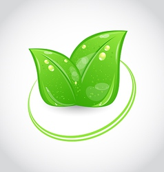 Green leaves ecologic emblem vector