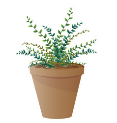 Spider plant with pot vector