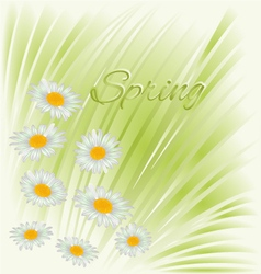Spring white flowers daisies green background vector image vector image