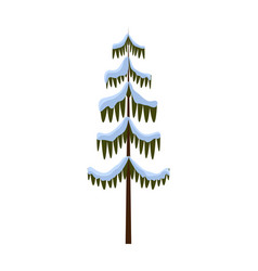 isolated spruce covered with snow on white winter vector image vector image