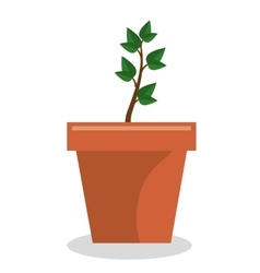 plant pot garden isolated icon vector image