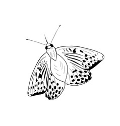 black silhouette of simple butterfly vector image vector image