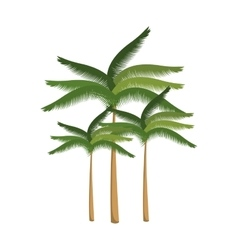 green palm tropical tree vector image