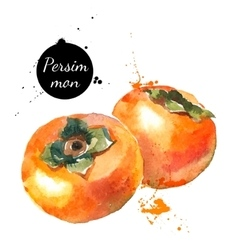 Hand drawn watercolor painting persimmon on white vector