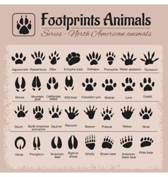 Animal tracks - north american animals vector