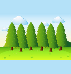 park scene with pine trees and field vector image vector image