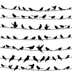 Bird on a wire4 vector