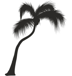 Palm silhouette black on white vector