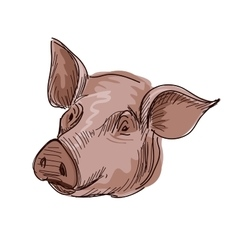 Doodle pig vector image vector image