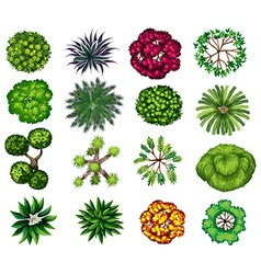 Different kind of plants vector image vector image