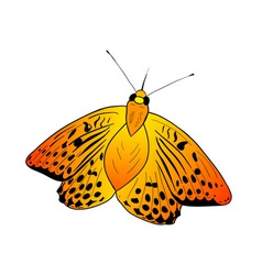 simple orange butterfly on the white vector image