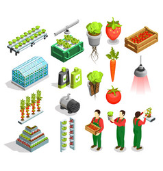 Hydroponic and aeroponic isometric icons vector