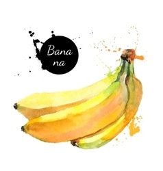 Hand drawn watercolor painting fruit banana on vector