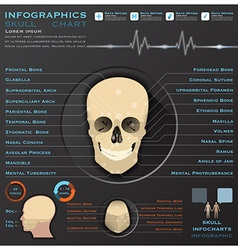 Skull human head medical infographic infochart vector