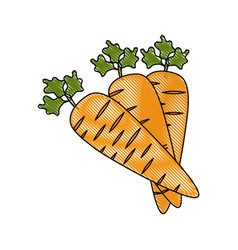 Vegetable carrot cartoon vector