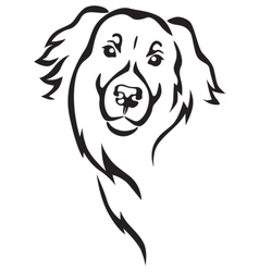 Newfoundland dog head vector