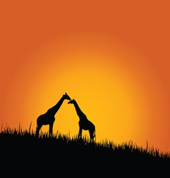 Giraffe in wilderness color vector
