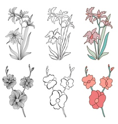 decorative orchids vector image