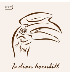 Indian hornbill vector image