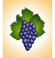 Close up purple grape isolated vector