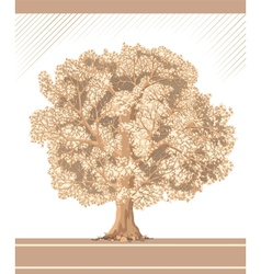 Detailed graphic sepia tree vector