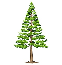 A green pine tree vector